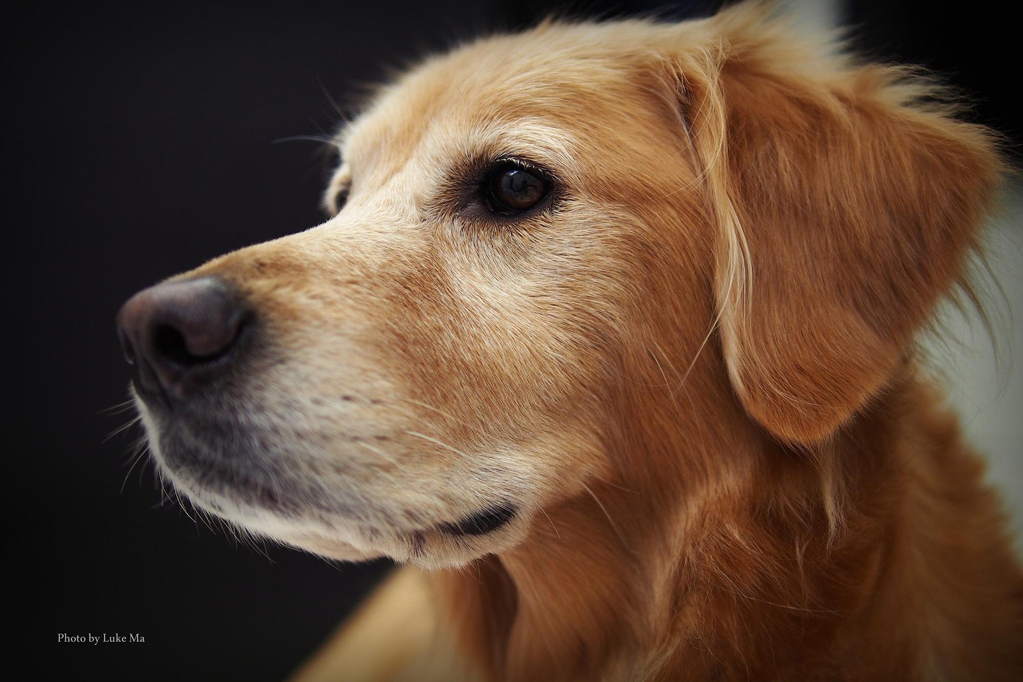 可爱狗品种图片欣赏