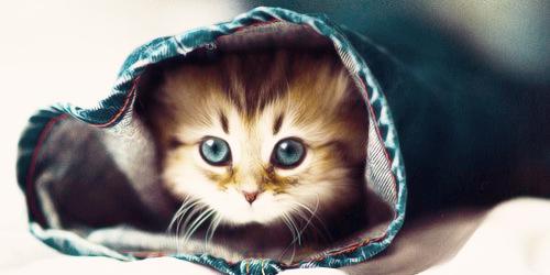cat_header