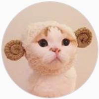 CAT instagram 2016